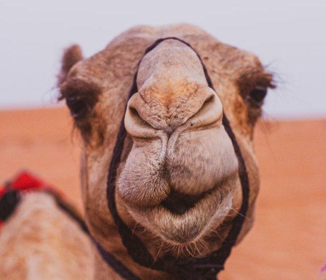 Az arab félsziget felfedezetlen gyöngyszeme Oman